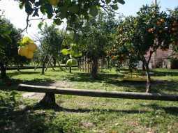Agriturismo Galea