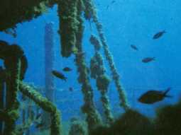 Diving Cormoran Residence