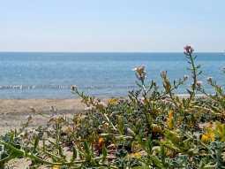 Oliveto a Mare