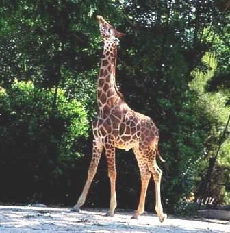 Tierpark von Falconara