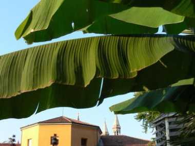 Botanischer Garten in Padua